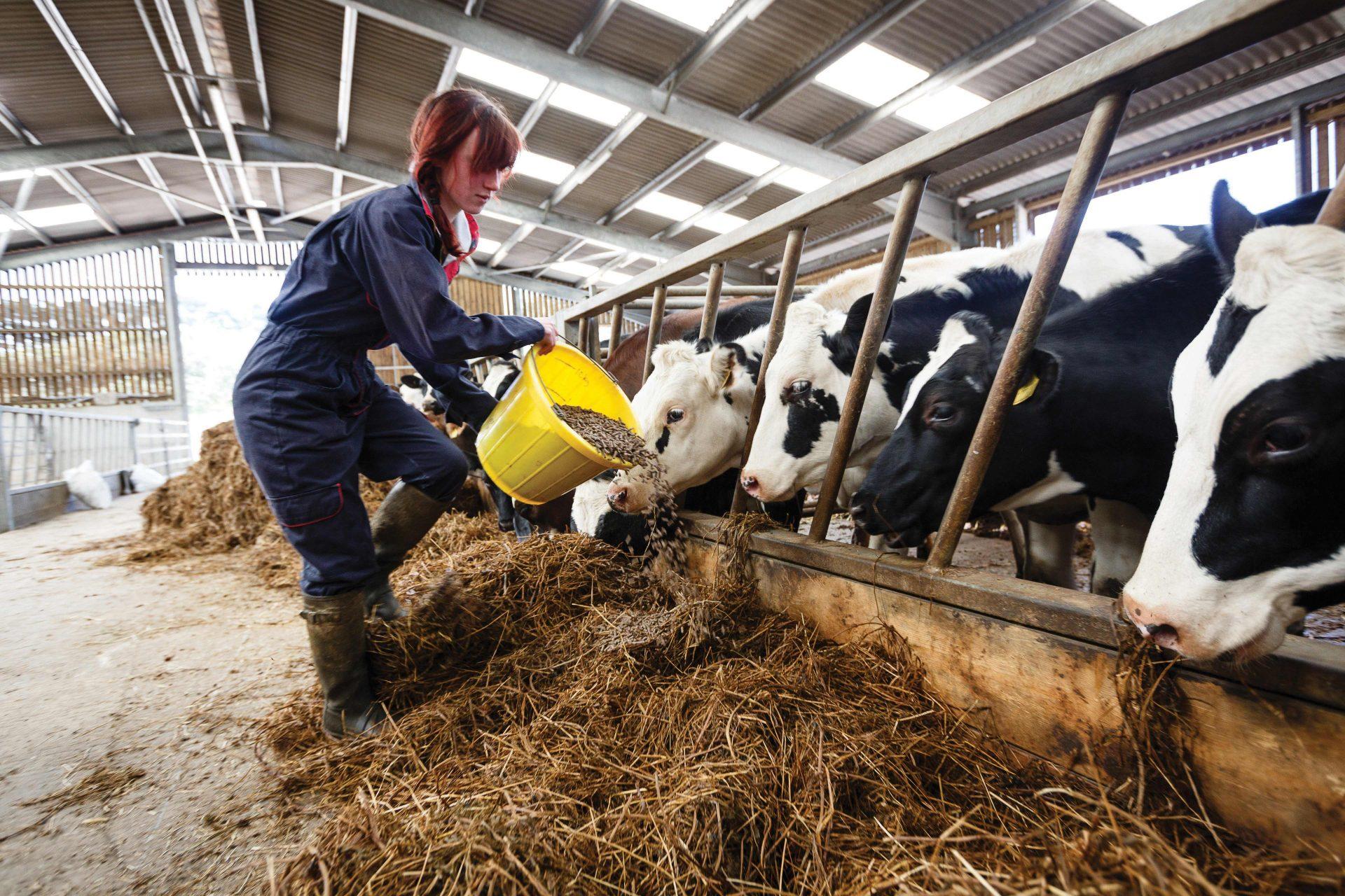 Agriculture Apprentice