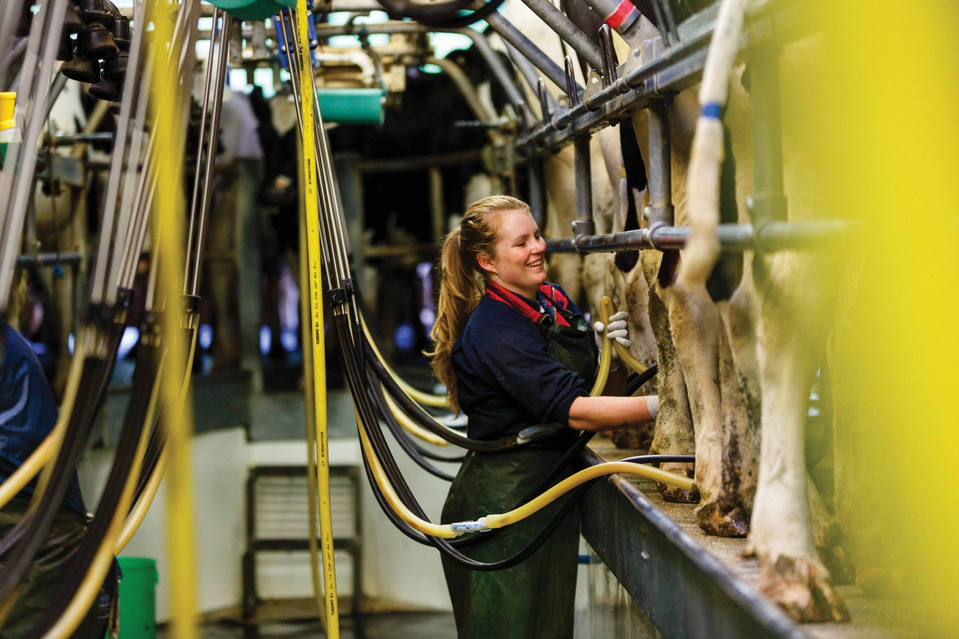Agriculture Apprentice (dairy)