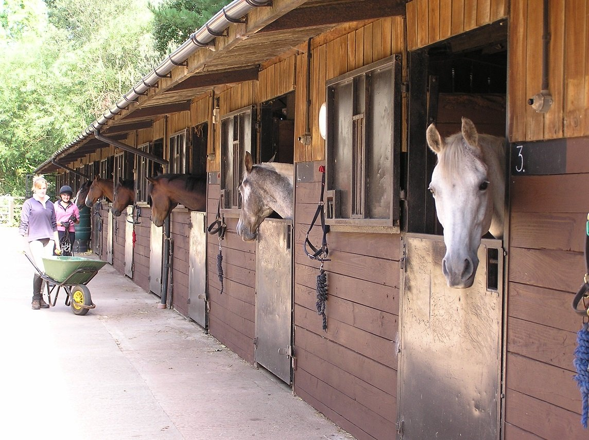 Horses peering out of their stables at Bicton College's Equestrian Centre