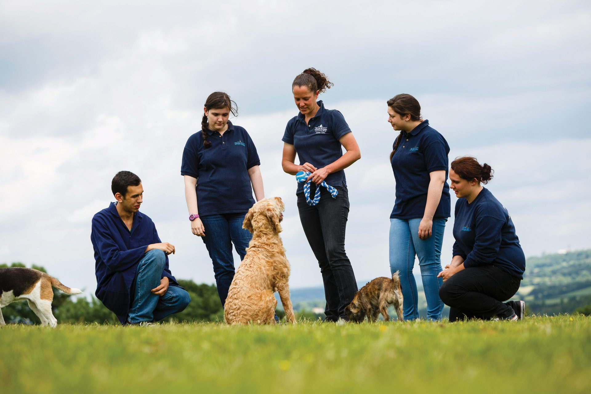 Animal Care Assistant, Plymouth Veterinary Hospital Groups, Estover