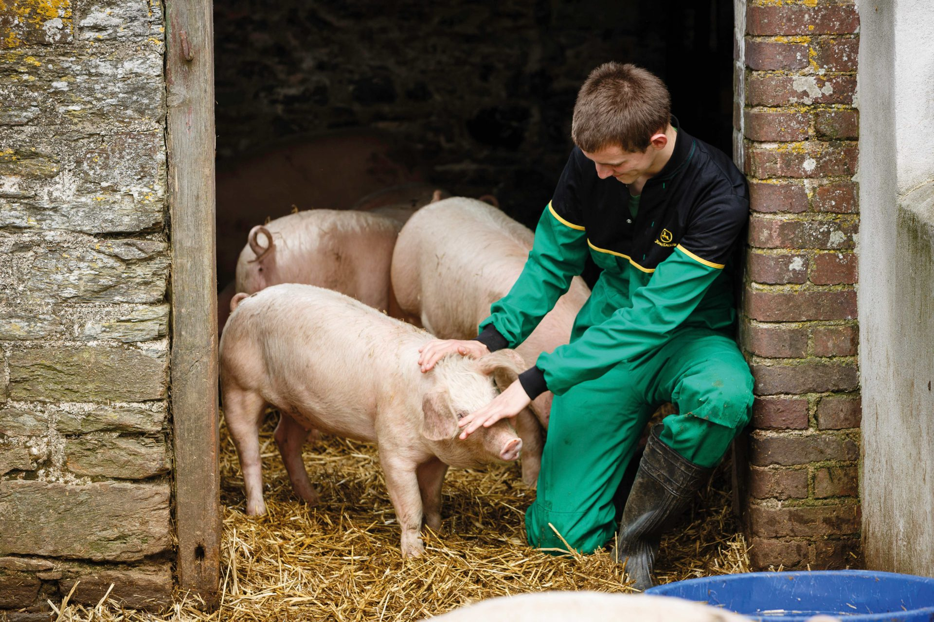 Young male agriculture students tending to pigs