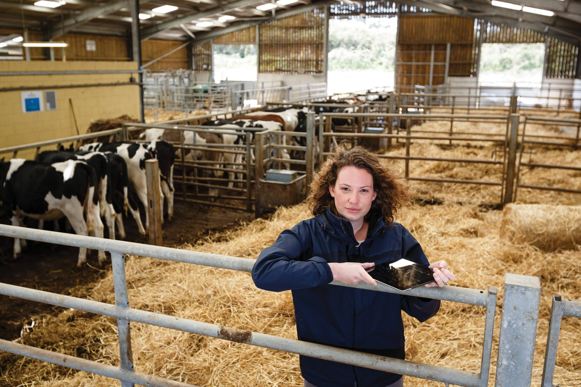 Agriculture degree student holding an iPad in a barn monitoring cow feed