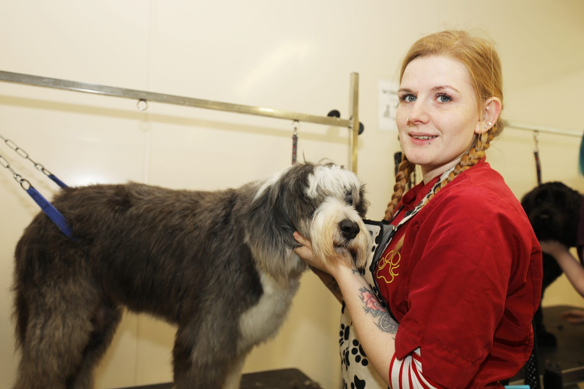 Animal Care Assistant, The Haven Dog Centre