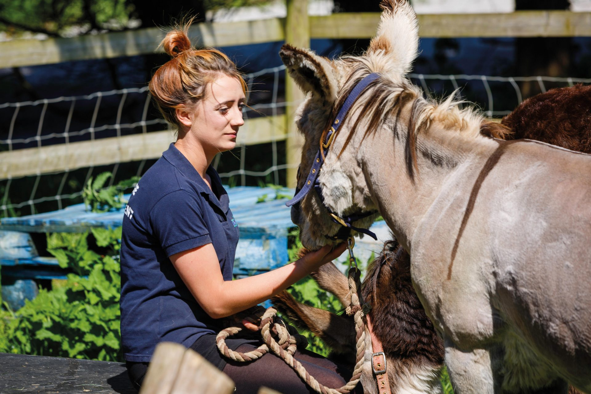 Animal Care Assistant, Tamar Valley Donkey Park
